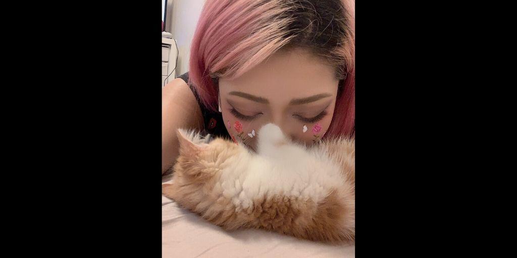 木村花の猫(からあげくん)は現在保護されて無事!硫化水素で巻き添えが心配!